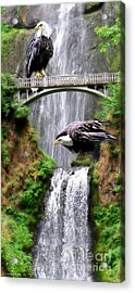 Gathering Of Eagles Acrylic Print by Constance Woods