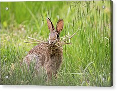 Gathering Rabbit Acrylic Print by Terry DeLuco