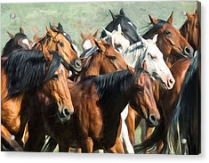 Gathering The Herd Acrylic Print