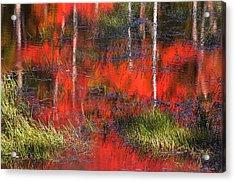 Gatineau Marsh Fall Colors Acrylic Print