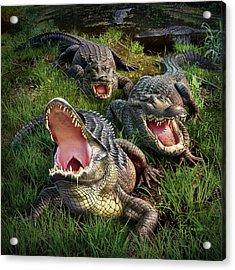 Gator Aid Acrylic Print