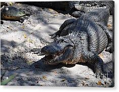 Acrylic Print featuring the photograph Gator Bait by John Black