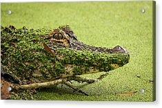 Gator Camo Acrylic Print