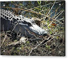 Gator Got Close Acrylic Print