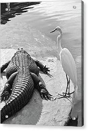 Gator Hand Acrylic Print