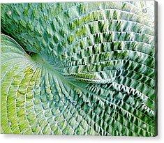 Gator Hosta Acrylic Print by Beth Akerman