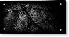 Gator Acrylic Print by Matti Ollikainen
