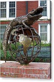 Gator Ubiquity Acrylic Print by D Hackett
