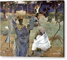 Gauguin: Martinique, 1887 Acrylic Print