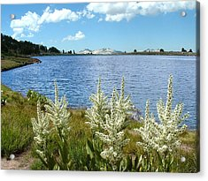 Gaylor Lakes And Queen Anns Lace Eastern Sierra Photo Acrylic Print