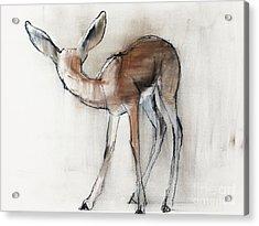 Gazelle Fawn  Arabian Gazelle Acrylic Print by Mark Adlington