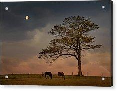 Gazing Peacefully Acrylic Print by Nancy Rose