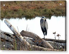 Gbh On Log Acrylic Print by Sharon Talson