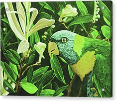 G'day Mate - Olive Acrylic Print by Julie Turner