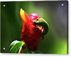 Acrylic Print featuring the photograph Gecko #1 by Anthony Jones