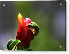 Acrylic Print featuring the photograph Gecko #2 by Anthony Jones