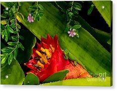 Gecko Aloha All Proceeds Go To Hospice Of The Calumet Area Acrylic Print