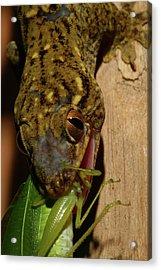 Gecko Feed Acrylic Print