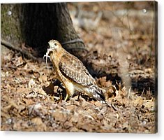 Acrylic Print featuring the photograph Gecko For Lunch by George Randy Bass