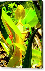 Gecko On Mosquito Catcher Orchid Acrylic Print