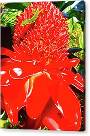 Gecko On Torch Ginger Acrylic Print