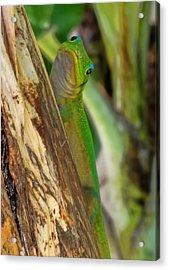 Gecko Up Close Acrylic Print