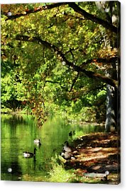Geese By Pond In Autumn Acrylic Print by Susan Savad