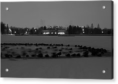 Geese In Frozen Lake Acrylic Print