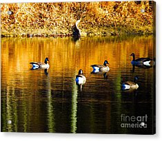 Geese On Lake Acrylic Print by Craig Walters