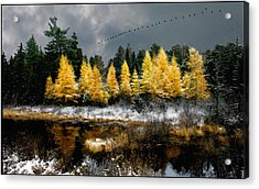 Acrylic Print featuring the photograph Geese Over Tamarack by Wayne King