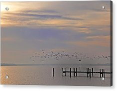 Geese Over The Chesapeake Acrylic Print by Bill Cannon