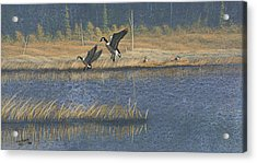 Geese Acrylic Print by Richard Faulkner