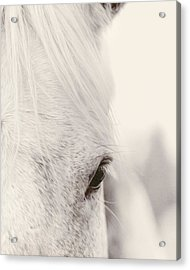 Gentle Beauty Acrylic Print by Debby Herold