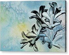 Gentle Blooms Acrylic Print by Manjot Singh Sachdeva