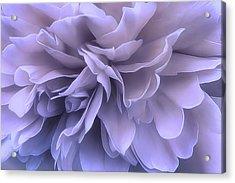 Acrylic Print featuring the photograph Gentle Breeze by Darlene Kwiatkowski