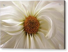 Gentle Curves Acrylic Print by Jessica Jenney