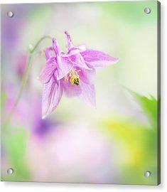 Gentle Elegance Acrylic Print