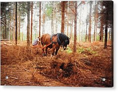 Gentle Giant - Horse At Work In Forest Acrylic Print