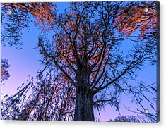 Gentle Giant Acrylic Print by Marvin Spates