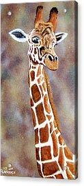 Gentle Giraffe Acrylic Print