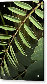 Acrylic Print featuring the photograph Gentle Morning Dew by Karen Musick