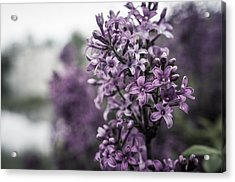 Gentle Spring Breeze Acrylic Print by Miguel Winterpacht