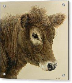 Gentle Swiss Calf Acrylic Print