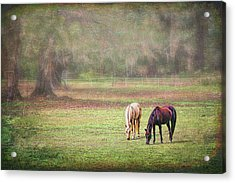 Acrylic Print featuring the photograph Gently Grazing by Lewis Mann