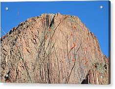Geology Sans Cantus  Acrylic Print by Thor Sigstedt