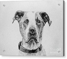 George Acrylic Print by Lyric Lucas
