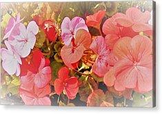 Geranium Acrylic Print by Ann Johndro-Collins