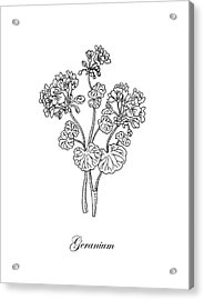 Geranium Flower Botanical Drawing  Acrylic Print