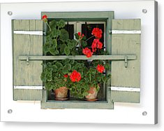 Geranium Window Acrylic Print by Frank Tschakert