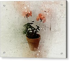 Geraniums 2 Acrylic Print